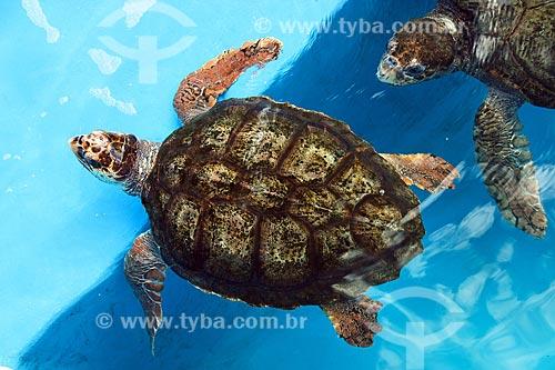 Detalhe de tartaruga-verdes (Chelonia mydas) - também conhecida como Uruanã ou Aruanã - na sede do Projeto TAMAR na Praça do Papa  - Vitória - Espírito Santo (ES) - Brasil