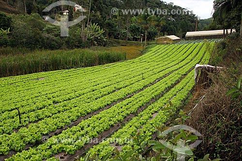 Plantação de alface  - Espírito Santo (ES) - Brasil