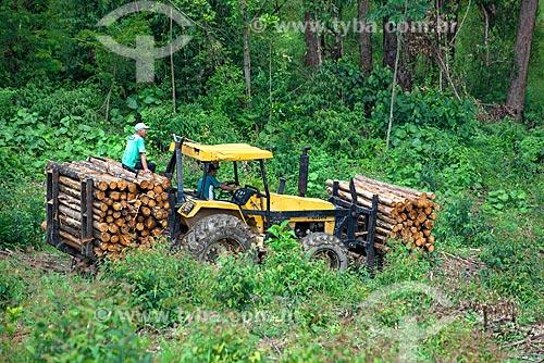 Trator carregando troncos de eucalipto  - Santa Branca - São Paulo (SP) - Brasil