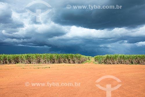 Vista de plantação de cana-de-açúcar  - Pedro Afonso - Tocantins (TO) - Brasil