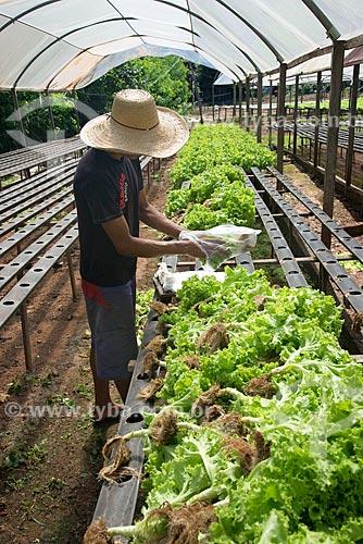 Estufa de horta hidropônica  - Palmas - Tocantins (TO) - Brasil