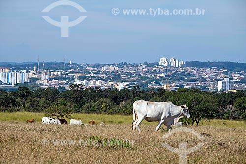 Gado no pasto na zona rural da cidade de São Carlos com a cidade ao fundo  - São Carlos - São Paulo (SP) - Brasil