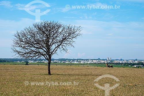 Árvore seca em pasto na zona rural da cidade de São Carlos com a cidade ao fundo  - São Carlos - São Paulo (SP) - Brasil