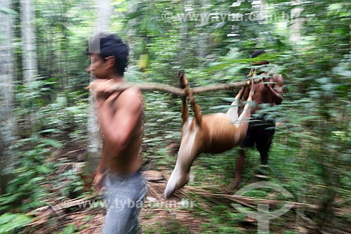 Ribeirinhos carregando veado caçado na floresta amazônica  - Amazonas (AM) - Brasil
