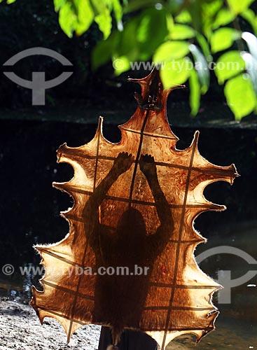 Curtimento artesanal de couro de veado na floresta amazônica  - Amazonas (AM) - Brasil