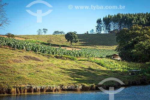 Vista de fazenda com plantação de tabaco às margens de rio na zona rural da cidade de Guarani  - Guarani - Minas Gerais (MG) - Brasil