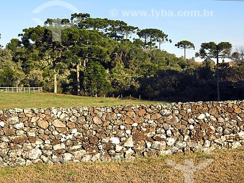 Muro de taipa na zona rural da cidade de Canela  - Canela - Rio Grande do Sul (RS) - Brasil