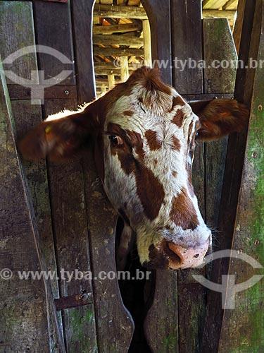 Detalhe de curral para vacinação de gado  - Lajeado - Rio Grande do Sul (RS) - Brasil