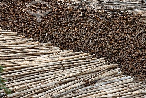 Vista de pilhas de troncos de árvores na fábrica da Fibria Celulose  - Jacareí - São Paulo (SP) - Brasil
