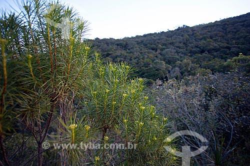 Vegetação no Parque Estadual do Ibitipoca durante a trilha do circuito de água  - Lima Duarte - Minas Gerais (MG) - Brasil