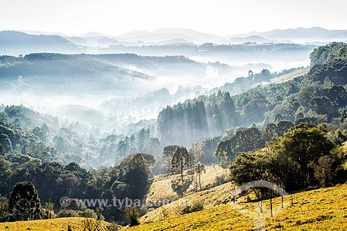 Paisagem rural no distrito de Linha Pinhal  - Treze Tílias - Santa Catarina (SC) - Brasil