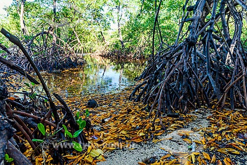 Vista de mangue próximo à Praia de Moreré  - Cairu - Bahia (BA) - Brasil