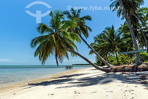 Vista de coqueiro na orla da Ponta dos Castelhanos  - Cairu - Bahia (BA) - Brasil