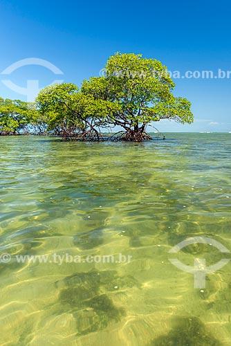 Árvores na orla da Ponta dos Castelhanos  - Cairu - Bahia (BA) - Brasil