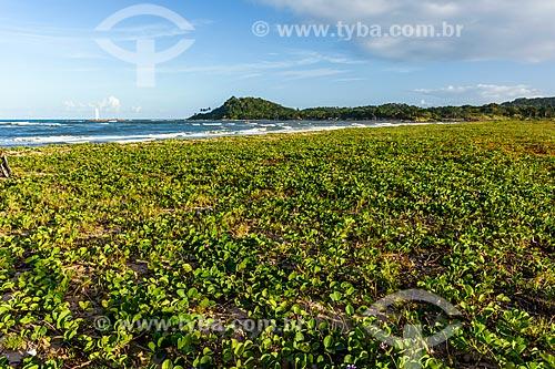 Vista da orla da Praia do Pontal  - Itacaré - Bahia (BA) - Brasil