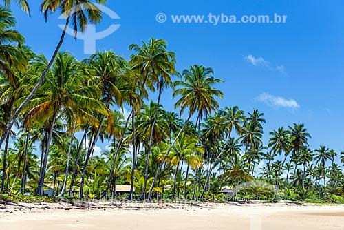 Coqueiros na orla da Praia da Bombaça  - Maraú - Bahia (BA) - Brasil