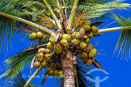 Detalhe de coqueiro na Praia dos Três Coqueiros  - Maraú - Bahia (BA) - Brasil