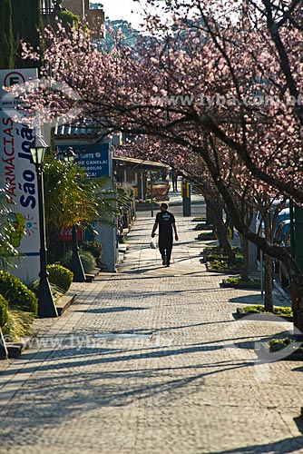 Vista de calçada na cidade de canela com cerejeiras floridas  - Canela - Rio Grande do Sul (RS) - Brasil