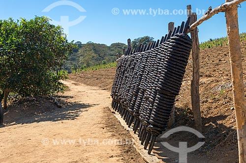 Detalhe de secagem de fumo de rolo na zona rural da cidade de Guarani  - Guarani - Minas Gerais (MG) - Brasil
