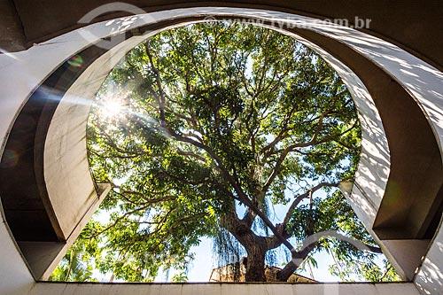 Vista de mangueira (Mangifera indica L) na garagem do Edifício Beverly Hills  - Rio de Janeiro - Rio de Janeiro (RJ) - Brasil