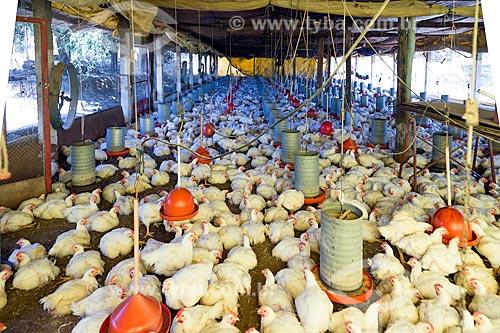 Interior de granja na zona rural da cidade de Guarani  - Guarani - Minas Gerais (MG) - Brasil