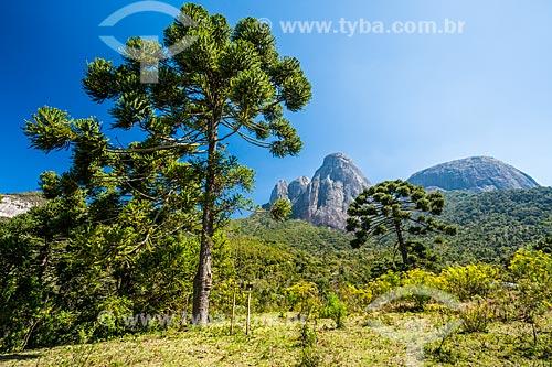 Vista de araucária (Araucaria angustifolia) no Parque Estadual dos Três Picos com o Três Picos de Salinas ao fundo  - Teresópolis - Rio de Janeiro (RJ) - Brasil