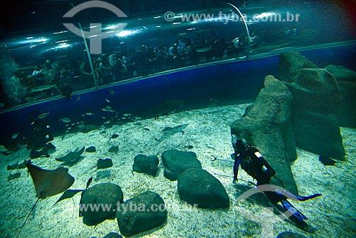 Mergulhador no AquaRio - aquário marinho da cidade do Rio de Janeiro  - Rio de Janeiro - Rio de Janeiro (RJ) - Brasil