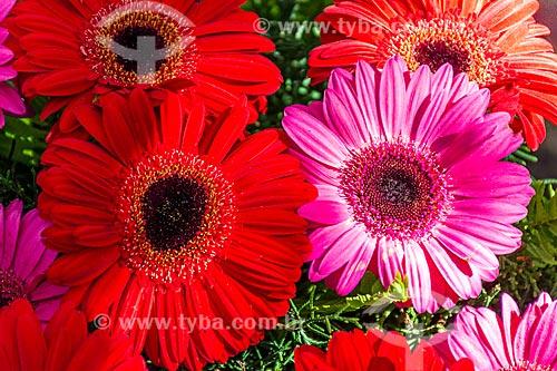Detalhe de Gerberas à venda em floricultura na Rua General Glicério  - Rio de Janeiro - Rio de Janeiro (RJ) - Brasil
