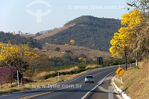 Vista de Ipês-Amarelo às margens da Rodovia Newton Penido (MG-050)  - Capitólio - Minas Gerais (MG) - Brasil
