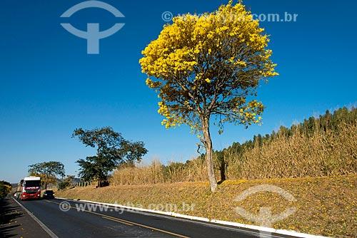 Vista de Ipê-Amarelo às margens da Rodovia Newton Penido (MG-050)  - Capitólio - Minas Gerais (MG) - Brasil