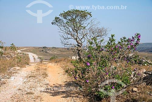 Estrada de Terra na zona rural da cidade de São Roque de Minas  - São Roque de Minas - Minas Gerais (MG) - Brasil