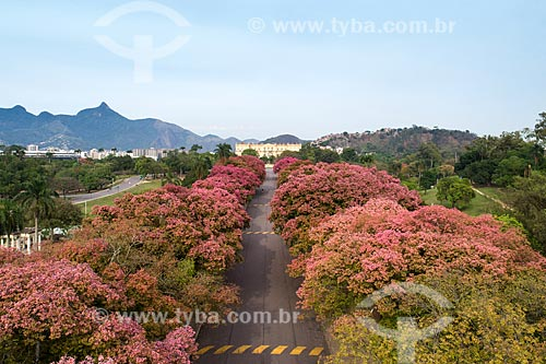 Foto feita por drone da Quinta da Boa Vista  - Rio de Janeiro - Rio de Janeiro (RJ) - Brasil