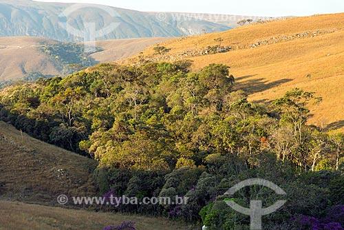 Mata Nativa e Campos de altitude no Parque Nacional da Serra da Canastra  - São Roque de Minas - Minas Gerais (MG) - Brasil