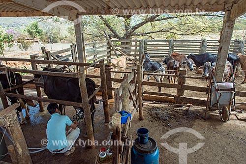 Ordenha mecanizada em fazenda na zona rural da cidade de Vargem Bonita  - Vargem Bonita - Minas Gerais (MG) - Brasil