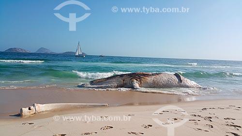 Baleia jubarte morta encalhada na orla da Praia de Ipanema  - Rio de Janeiro - Rio de Janeiro (RJ) - Brasil
