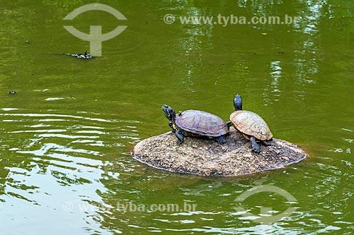 Cágados no lago do Parque Moinhos de Vento  - Porto Alegre - Rio Grande do Sul (RS) - Brasil