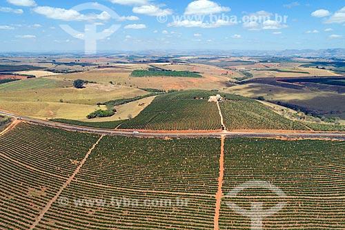Foto feita com drone de plantação de café em meio à Rodovia MG-341  - São Roque de Minas - Minas Gerais (MG) - Brasil