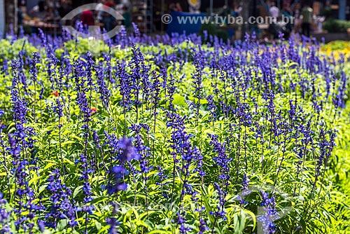 Detalhe de canteiro de flores na Praça das Flores  - Nova Petrópolis - Rio Grande do Sul (RS) - Brasil