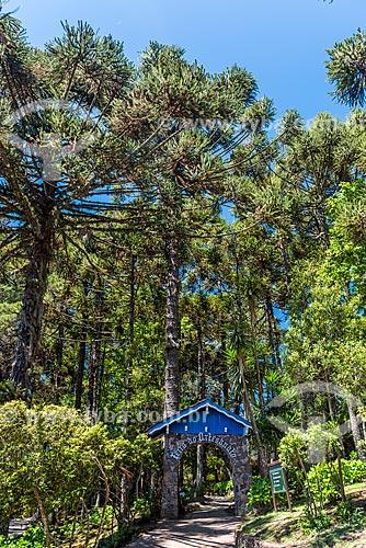 Trilha no Parque Estadual do Caracol  - Canela - Rio Grande do Sul (RS) - Brasil