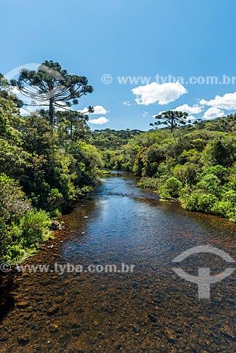 Vista de rio no Parque Nacional dos Aparados da Serra  - Cambará do Sul - Rio Grande do Sul (RS) - Brasil