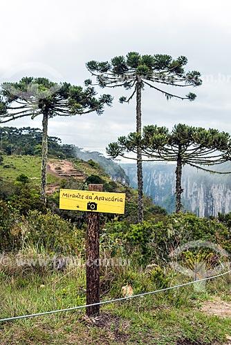 Vista de araucárias (Araucaria angustifolia) a partir do Mirante das Araucárias no Parque Nacional dos Aparados da Serra  - Cambará do Sul - Rio Grande do Sul (RS) - Brasil