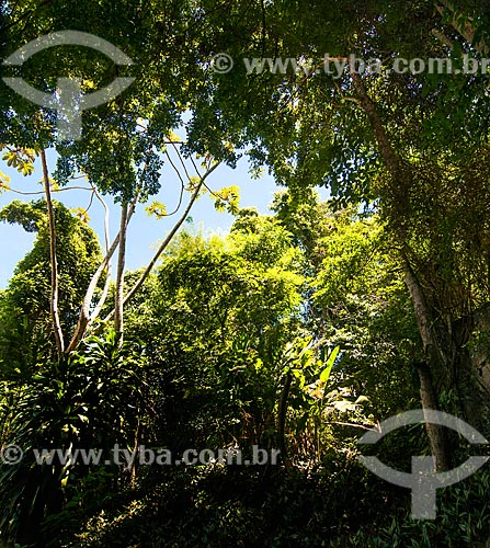 Vista geral de árvores  - Niterói - Rio de Janeiro (RJ) - Brasil