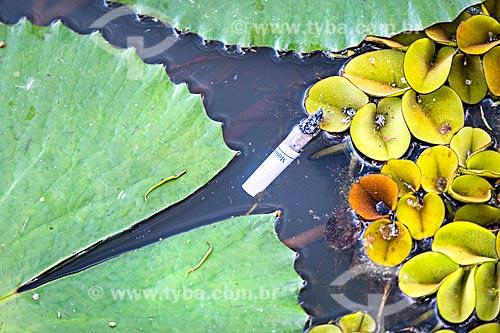 Detalhe de bituca no lago do Horto Florestal Municipal Edmundo Navarro de Andrade  - Rio Claro - São Paulo (SP) - Brasil