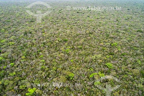 Foto feita com drone da Floresta Nacional do Araripe-Apodi  - Barbalha - Ceará (CE) - Brasil