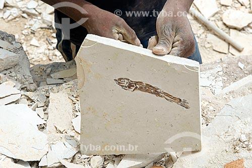 Detalhe de fóssil de peixe encontrado durante a extração de calcário no corte de Pedra Cariri  - Santana do Cariri - Ceará (CE) - Brasil