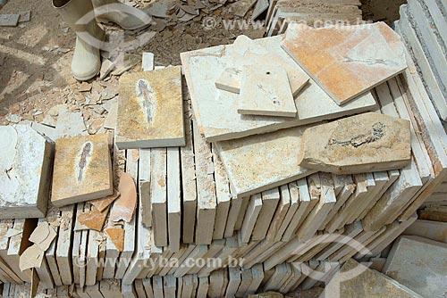 Fósseis de peixe encontrado durante a extração de calcário no corte de Pedra Cariri  - Santana do Cariri - Ceará (CE) - Brasil