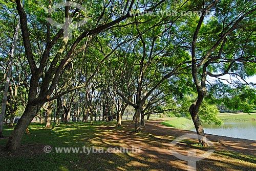 Parque do Ibirapuera - Jacarandá-mimoso (Jacaranda Mimosaefolia) no verão  - São Paulo - São Paulo (SP) - Brasil