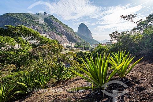 Vista do Pão de Açúcar durante a escalada no Morro da Babilônia  - Rio de Janeiro - Rio de Janeiro (RJ) - Brasil