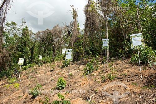 Reflorestamento feito pelos alunos do SESI Cidadania - Favela Santa Marta  - Rio de Janeiro - Rio de Janeiro (RJ) - Brasil
