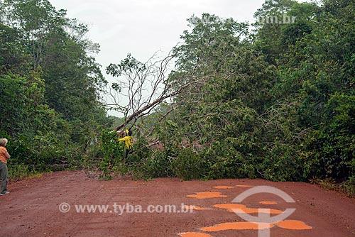 Árvore caída em trecho da Rodovia BR-156  - Mazagão - Amapá (AP) - Brasil